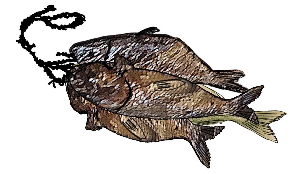 Food - Smoked fish - 00A - Sierra Leone