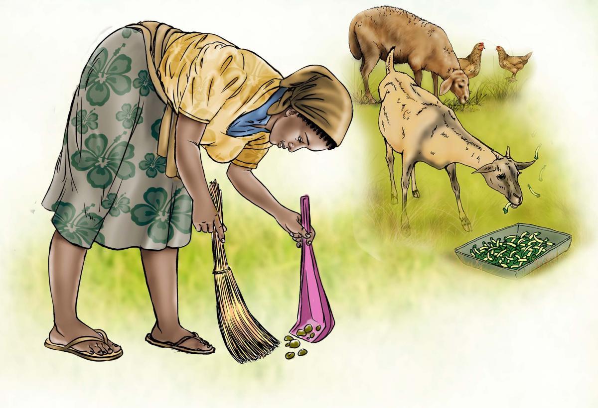 Sanitation - Cleaning up animal feces - 02B - Sierra Leone