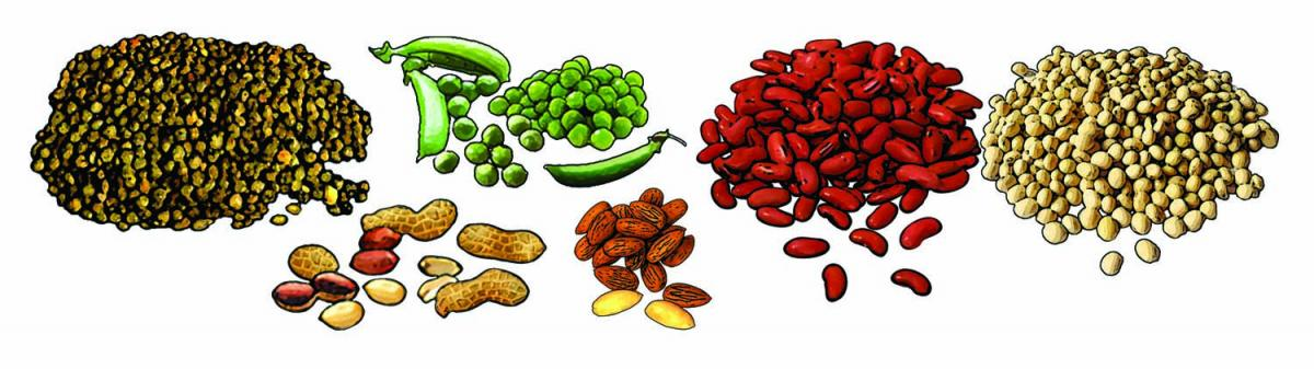 Food - Legumes and seeds - 00H - Non-country specific