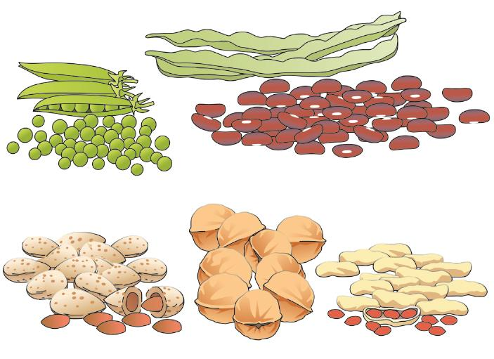 Food - Beans and Nuts  - 00J - Kyrgyz Republic