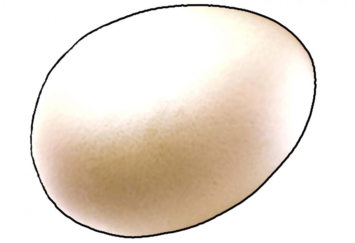 Food - Egg - 00B - Non-country specific