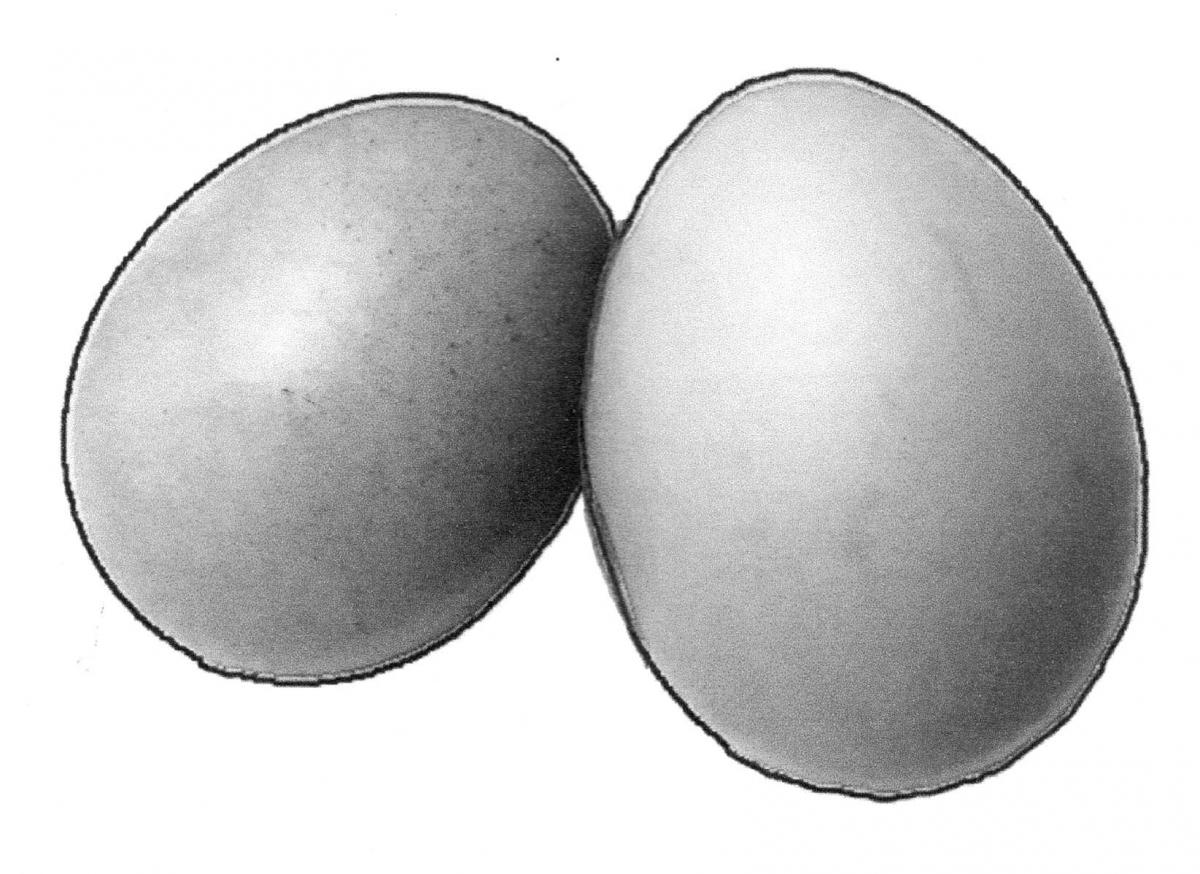 Food - Eggs - 00C - Non-country specific