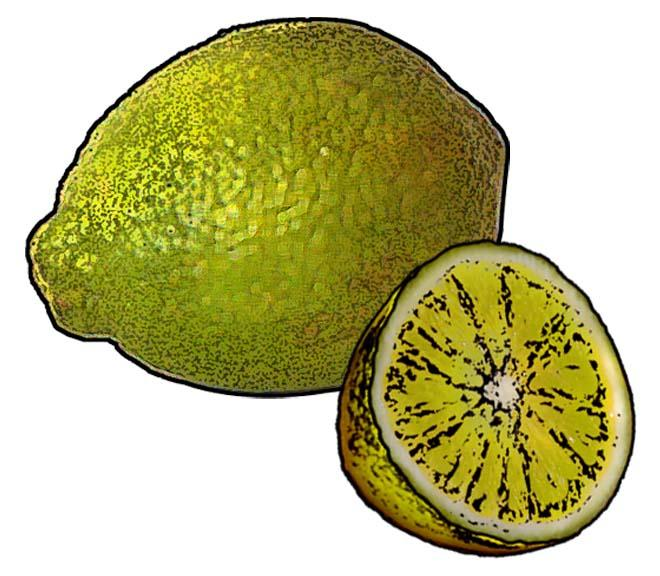 Food - Lemon/Lime - 00D - Non-country specific