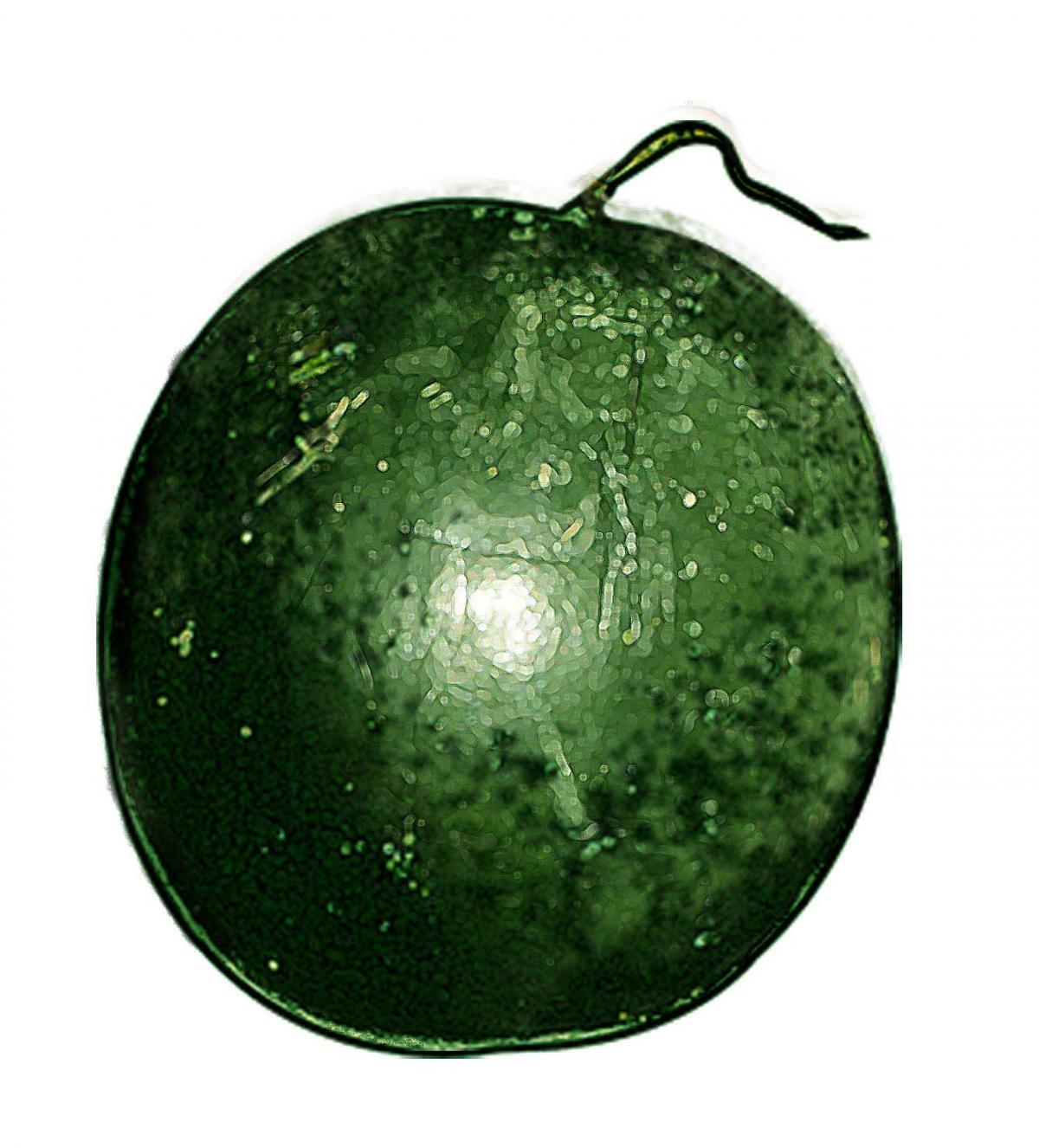 Food - Melon - 00I - Non-country specific