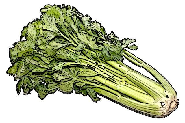 Food - Celery - 00A - Non-country specific
