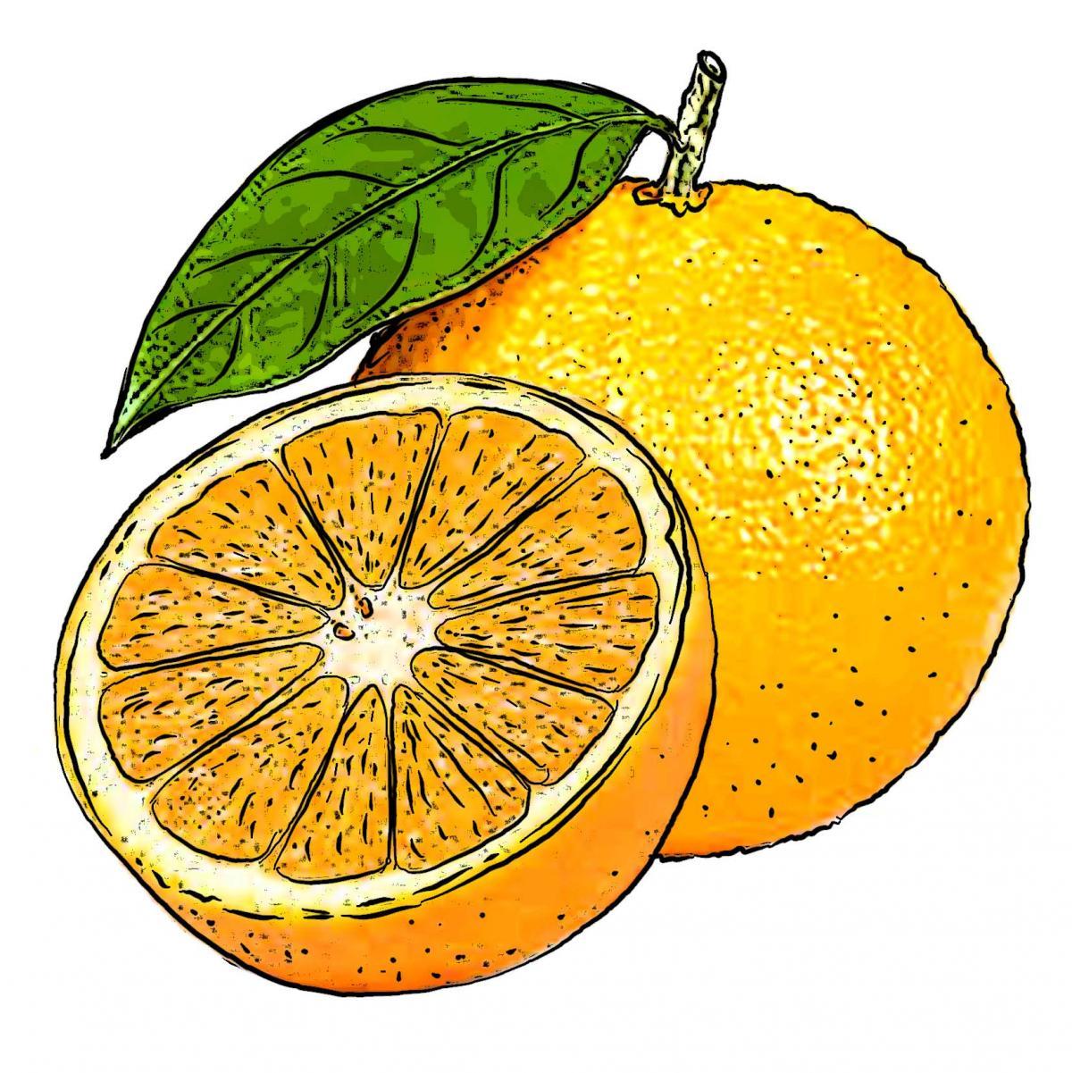 Food - Oranges - 00E - Non-country specific