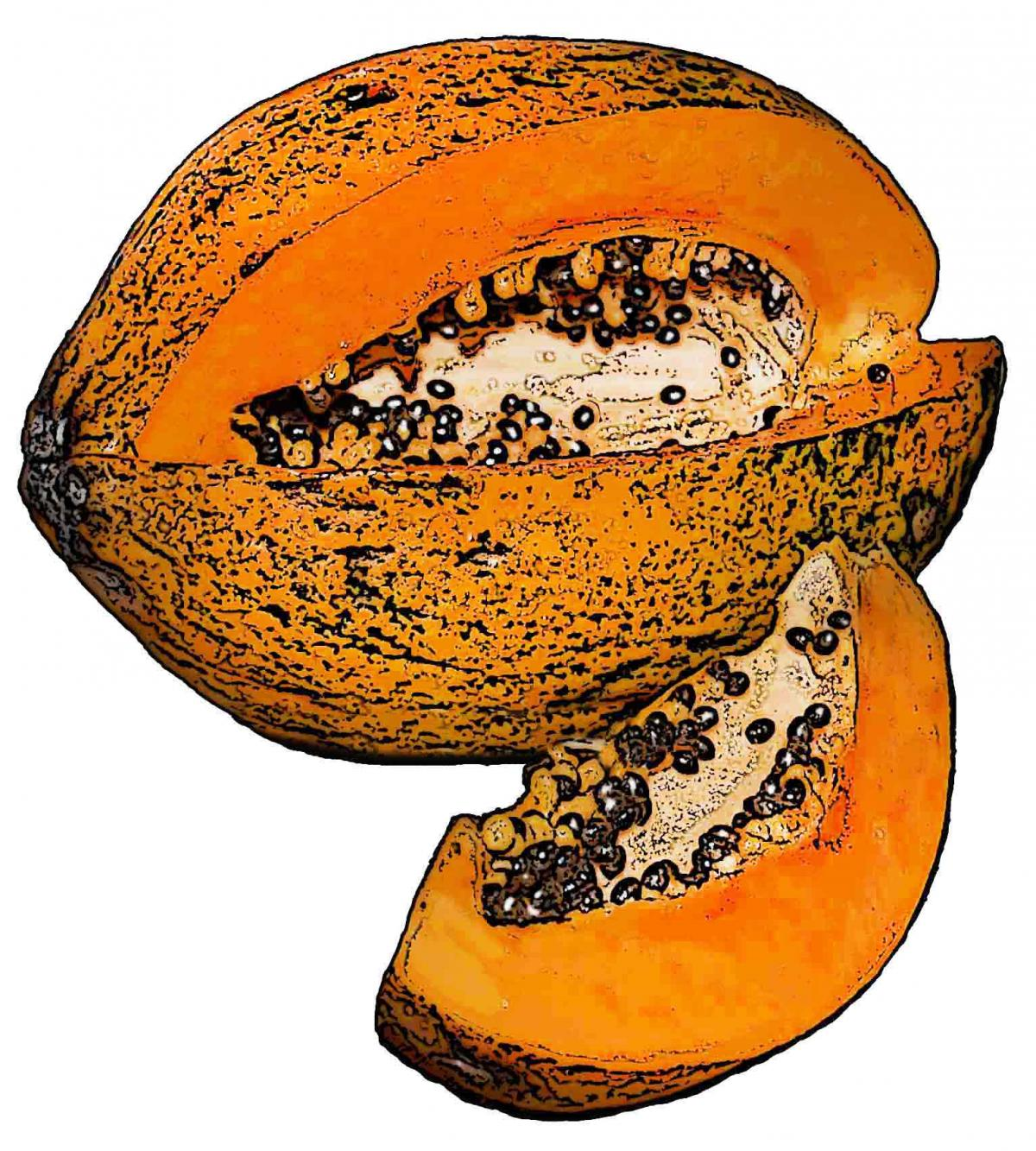 Food - Papaya - 00M - Non-country specific