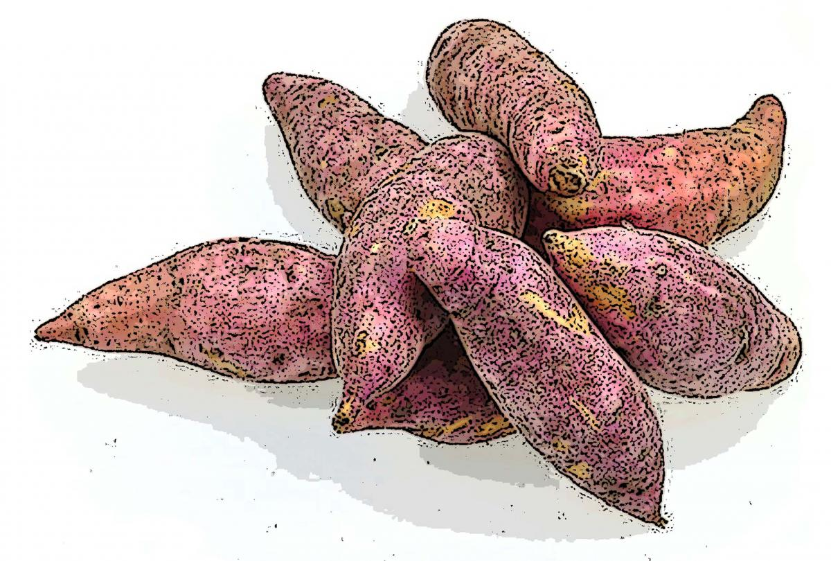 Food - Sweet Potato - 00N - Non-country specific