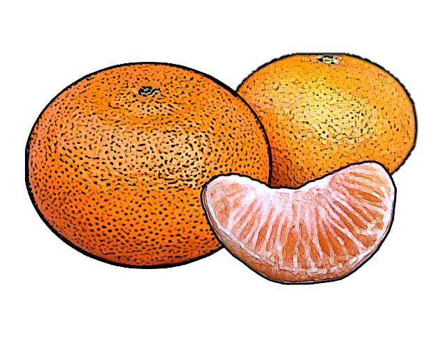 Food - Tangerines - 00O - Non-country specific