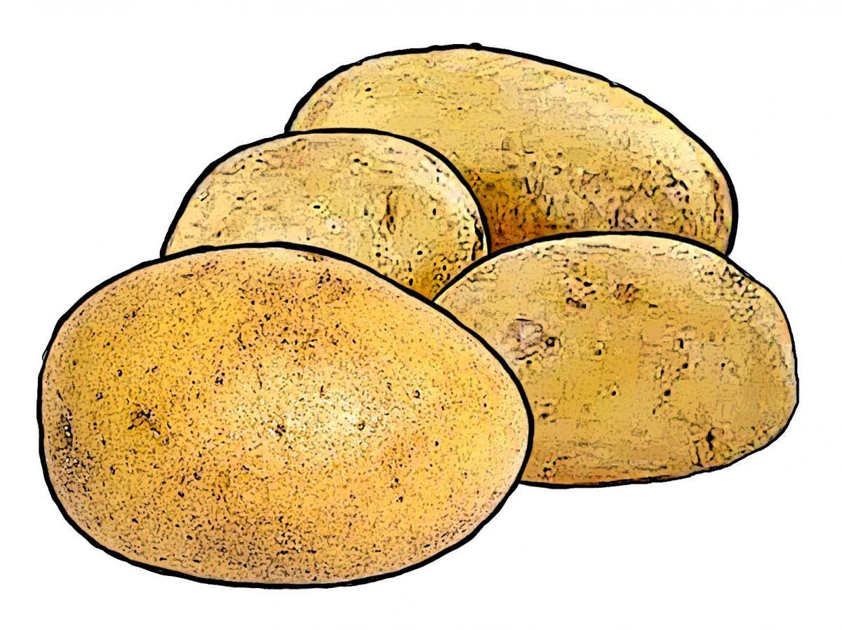 Food - Potatoes - 00C - Non-country specific