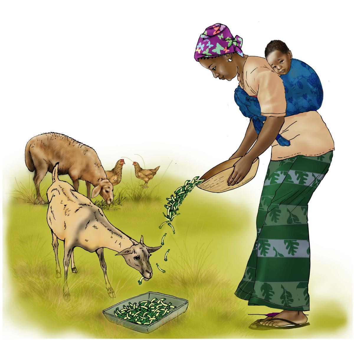 Animals - Feeding animals - 00B - Niger