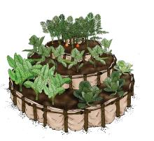 Horticulture - Kitchen garden - 01B - Rwanda