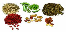 Food - Beans - 00J - Non-country specific