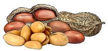 Food - Peanuts - 00F - Non-country specific