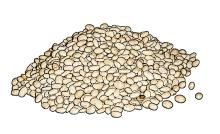 Food - White Beans - 00G - Non-country specific