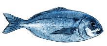 Food - Fish - 00E - Non-country specific