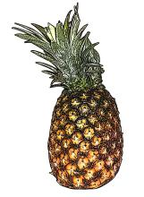 Food - Pineapple - 00L - Non-country specific