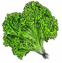 Food - Lettuce - 00D - Non-country specific