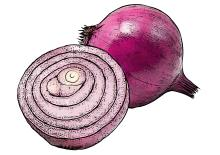 Food - Red Onion - 00F - Non-country specific