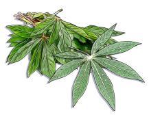 Food - Cassava Leaves - 01A - Rwanda