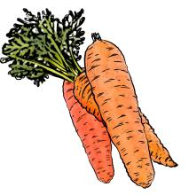 Food - Bunch of carrots - 00C - Non-country specific