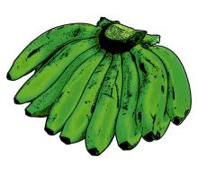 Food - Green Bananas - 00D - Non-country specific