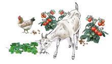 Animals - Animals in the garden - 01 - Nigeria