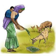 Animals - Feeding animals - 00A - Niger