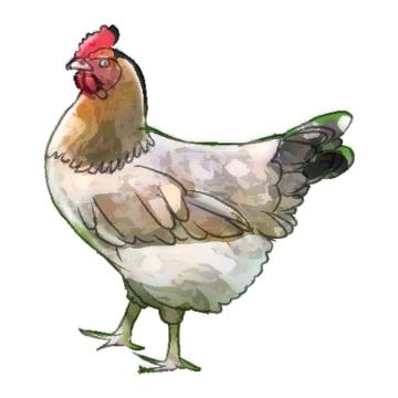 Animals - Chicken - 00L - Non-country specific