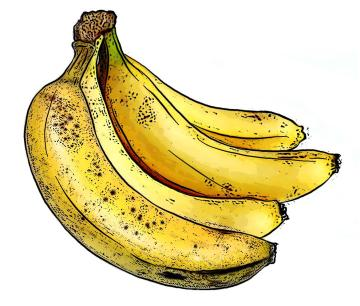 Food - Bunch of bananas - 00B - Non-country specific