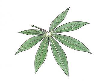 Food - Cassava Leaves - 01B - Rwanda
