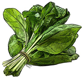 Food - Spinach - 00I - Non-country specific