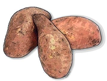 Food - Sweet Potato - 00K - Non-country specific
