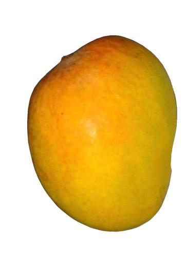 Food - Mango - 00P - Non-country specific