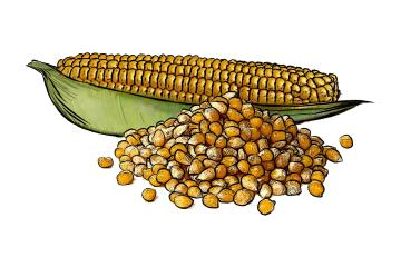 Food - Corn Husk - 00A - Non-country specific