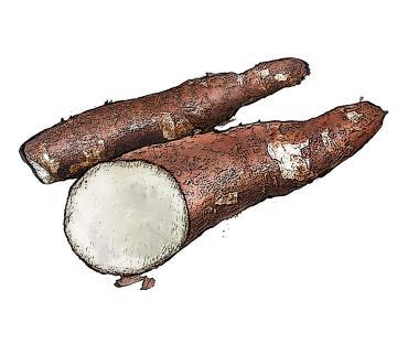 Food - Cassava - 00B - Non-country specific