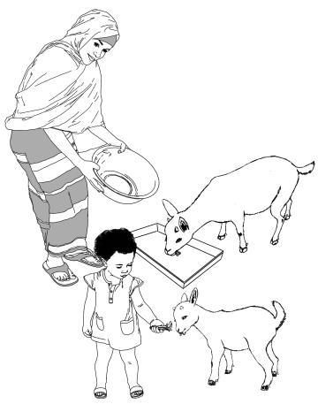 Animals - Feeding animals - 00 - Non-country specific