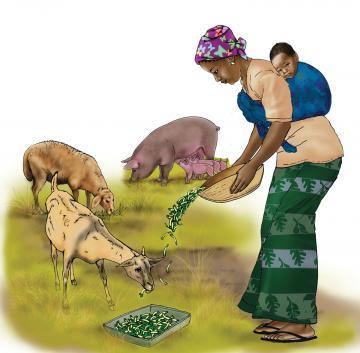 Animals - Feeding animals - 01 - Rwanda